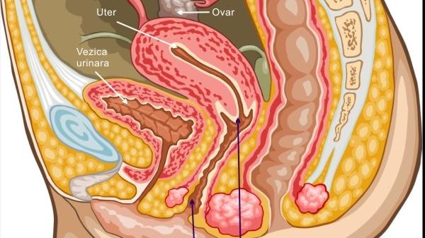 Aparatul genital feminin/FOTO: medicale.interactiuni.ro