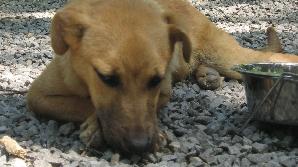 Căţel abandonat / FOTO: Cristina Dinu, REALITATEA.NET