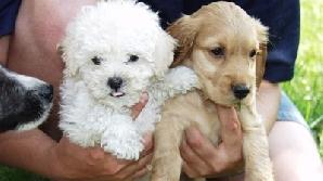 Consiliul Local al Municipiului Cluij-Napoca restricţionează numărul de animale de companie ce pot fi deţinute de cetăţeni