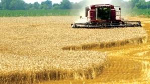 Românii care merg în Germania să lucreze în agricultură câştigă între 800 şi 1.500 de euro pe lună