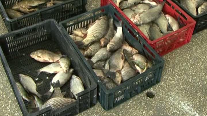 Braconieri în perioada de prohibiţie la peşte, în Deltă / FOTO: RTV