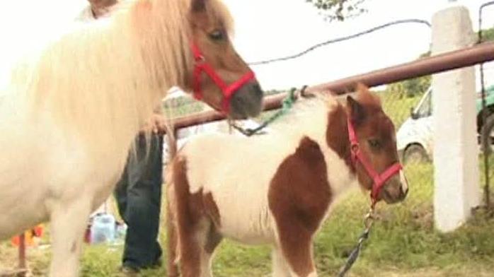 Localitatea mureşeană Hodoşa este cunoscută pentru tradiţioanala expoziţie de cai