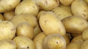 Doar circa 17% din cartofii sădiţi anul acesta sunt certificaţi