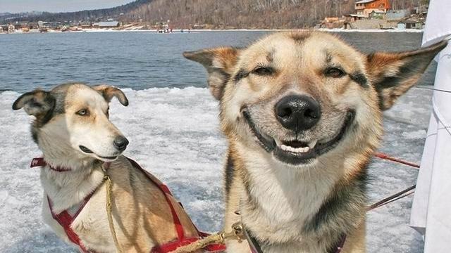 Câinii, cei mai buni prieteni ai oamenilor / FOTO: snootypaws.com.au