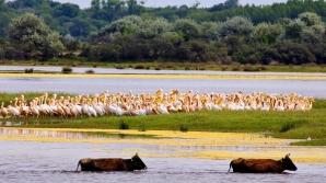 Delta Dunării / FOTO: internationalrivers.org/Daniel Petrescu