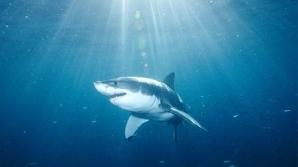 Sute de rechini au fost filmaţi în largul coastelor australiene