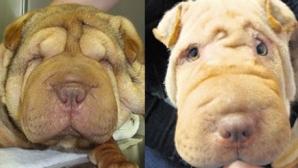 Molly, înainte de lifting şi după lifting / FOTO: Archant