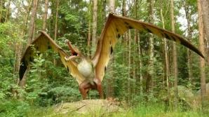 Aşa se crede că arătau pterozaurii / FOTO: yourdiscovery.com