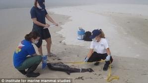 30 de delfini morţi în Golful Mexic / FOTO: Institute for Marine Mammals Studies