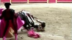 Un taur l-a luat în coarne pe toreador, chiar înainte să moară