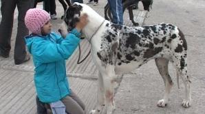 Peste 600 de câini au participat la o expoziţie organizată la Slobozia