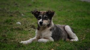 Câini abandonaţi într-o pădure, lângă Târgovişte / FOTO: cafeturco.wordpress.com