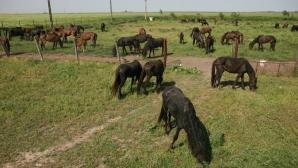 Caii din letea ar fi ajuns în farfuriile britanicilor, spune The Sun