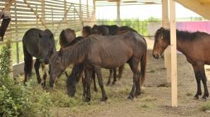 Caii de la Letea, la ferma din Urleasca / FOTO: adoptiedistanta.ro