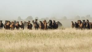 Caii sălbatici din Delta Dunării, ultimii din Europa / FOTO: deltadunarii.fotodelta.ro