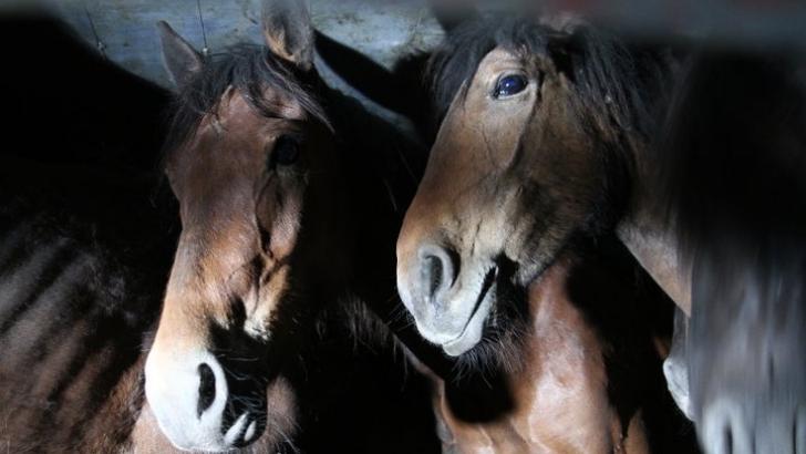 Cei 9 cai bolnavi de la Letea au fost eutanasiaţi / FOTO: Vier Pfoten