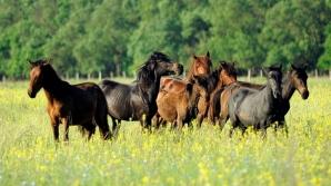 Caii de la Letea, în sălbăticie / FOTO: MIHAI VASILE / VIER PFOTEN ROMANIA