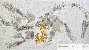 Plesiozaurul gestant / FOTO: BBC