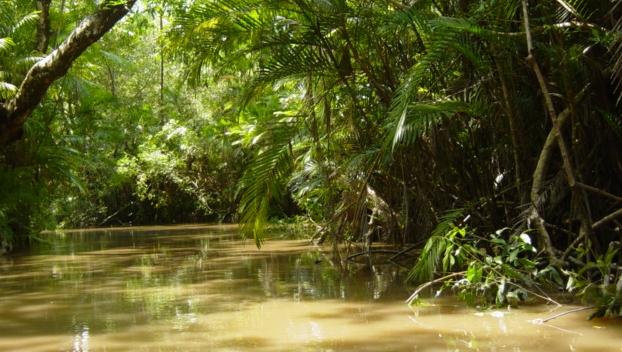 Trib de indieni din Amazon, ameninţat cu masacrarea