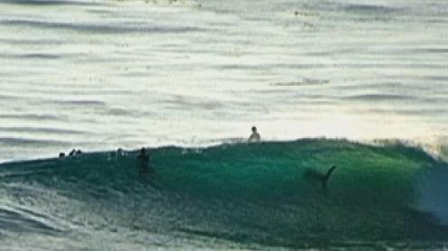 Un rechin în valuri printre surferi