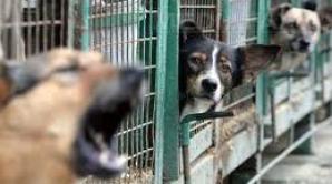 În Bucureşti sunt doar doi hingheri la 40.000 de câini.