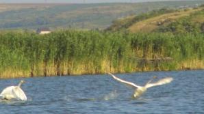 Delta Dunării este preferata turiştilor care au venit în România în 2011