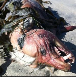 Cadavrul unui animal monstruos, găsit pe o plajă din San Diego