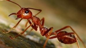Adevărul despre furnici. Cât de harnici sunt de fapt? Nimeni nu se aştepta