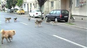 Nou incident: o altă persoană muşcată de câinii fără stăpân, în Capitală