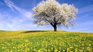 Primăvara şi-a intrat în rol! Vezi PROGNOZA pe trei zile