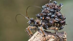 Cea mai CIUDATĂ insectă de pe Pământ. Vezi cum arată
