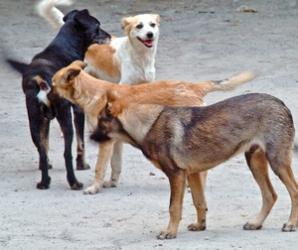 Peste 100 de câini vor fi duşi până la sfârşitul săptămânii într-un adăpost privat din satul Uzunu