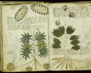 Manuscrisul Voynich, scris într-o limbă necunoscută