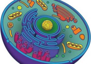 Bacalaureat 2012 la biologie şi anatomie