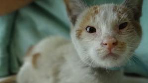 Ni Hao, pisicuţa care a supravieţuit unei călătorii de 30 de zile pe apă, fără apă şi mâncare. Foto: LA Weekly