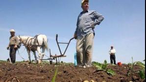 Aproape o treime dintre români sunt încă prinşi în agricultura de subzistenţă