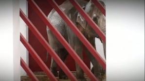 Elefănţica Tania este vedeta de la grădina zoologică din Târgu Mureş