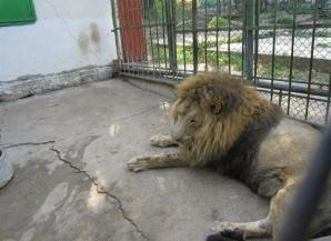 Grădina zoologică din Galaţi