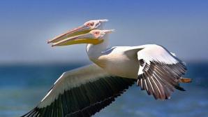 ANOMALIE a naturii? Imagine BIZARĂ surprinsă de un fotograf ucrainean în Delta Dunării