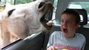 Un cal a avut o problemă cu caii putere