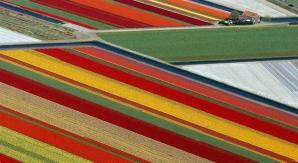 Câmpurile de lalele din Lisse, Olanda