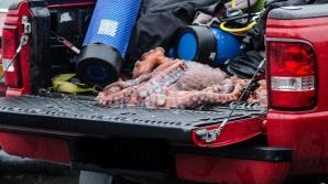 Scafandul american susține că vânează caracatițe pentru a le mânca