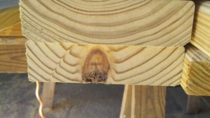 Apariţii misterioase în lemn