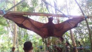 """""""CHUPACABRA"""" DIN PERU: Mister dezlegat în cazul unei înspăimântătoare creaturi"""