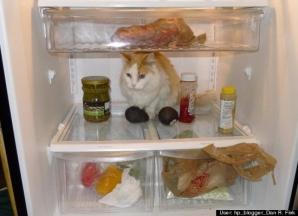 EXPERIMENT inedit cu pisici: unde se doarme cel mai bine în frigider?