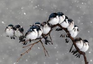 IMAGINI MIRIFICE: Cele mai bune fotografii din categoria natură