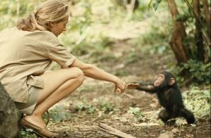 1964 * TANZANIA - Jane Goodall şi cimpanzeul Flint.