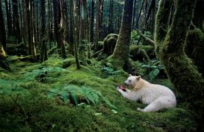 Incredibila poveste ilustrată a celor 125 de ani de National Geographic