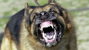 Bărbat cercetat după ce câinele său a muşcat un adolescent de 14 ani, pe stradă