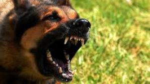 Suceava: Bărbat cercetat penal după ce câinele său a intrat în curtea vecinului şi l-a muşcat